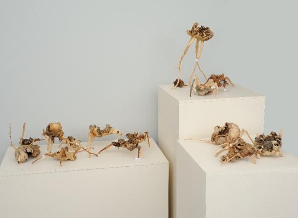Amelia Maree - 'Namelidae' (Mopane wood, 80 x 160 x 110 cm)